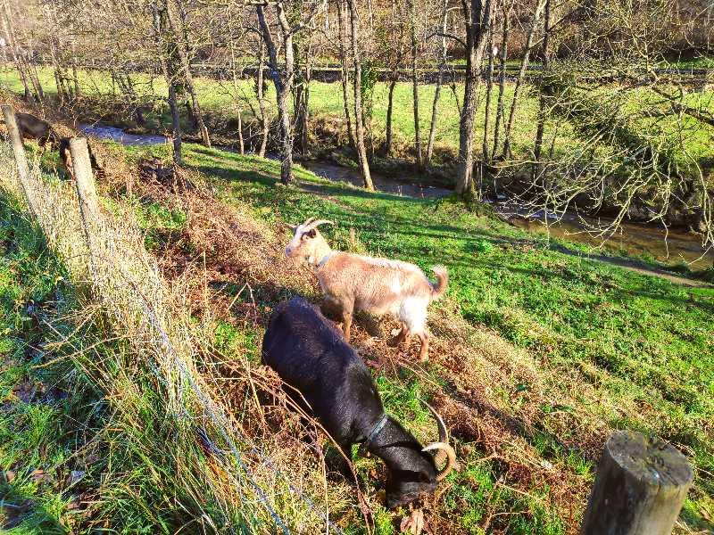 Animales por la via verde de arrazola